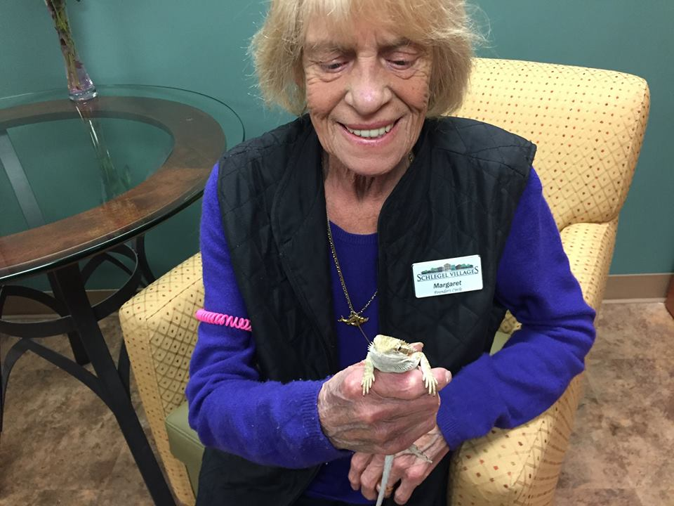 Pablo the Bearded Dragon - Lizard at Wentworth Heights